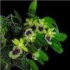 Мои цветочки) заметки начинающего цветовода - последнее сообщение от mademoiselle Jeannete