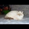 Подарю гигантскую улитку,  ахатину ретикуляту - последнее сообщение от Yuliya.2012