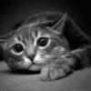 Форель или семга под укропным соусом - последнее сообщение от olka_mila