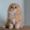 Куплю ветеринарные паспорта казахстанского нового образца - последнее сообщение от Meliss